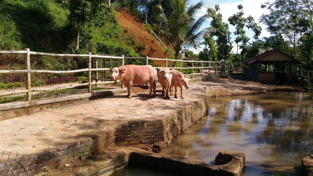 wisata eduksi untuk anak di Bogor