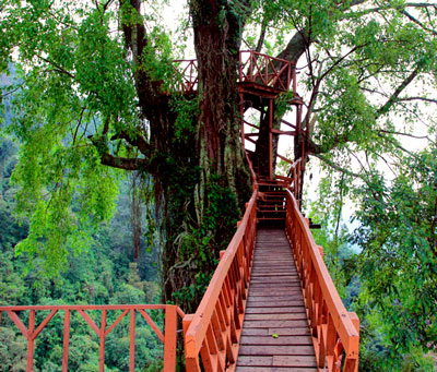 rumah pohon jonggol